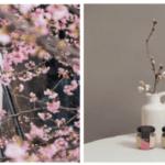 桜の季節に可愛らしい桜団子に桜マフィン。原宿巡りのお供にいかがですか? #桜団子 #TRUNK #桜マフィン