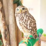 話題の動物カフェに行ってみた Vol.2「フクロウのお庭 owl's garden」